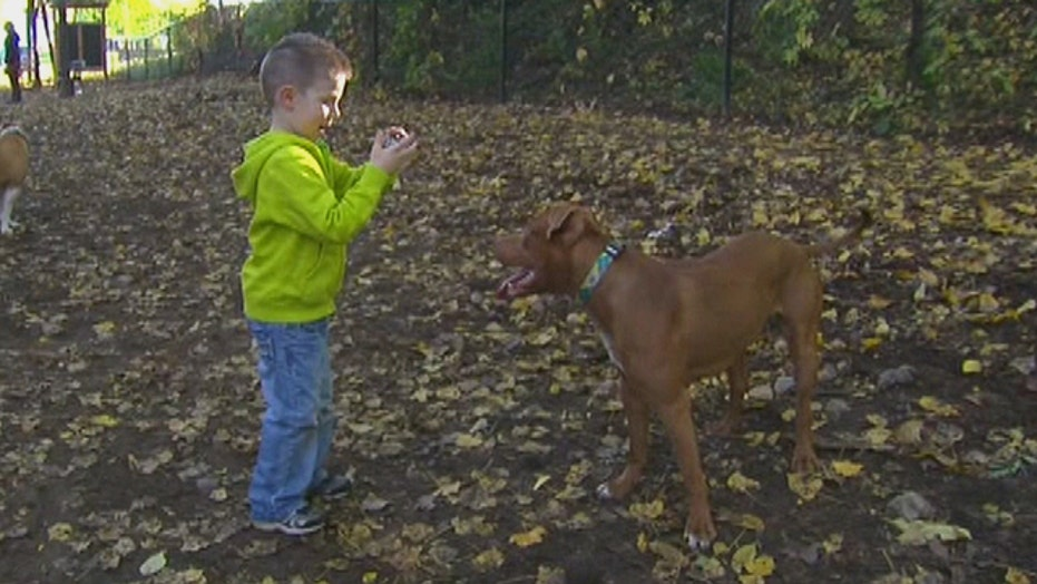 Pitbull saves toddler