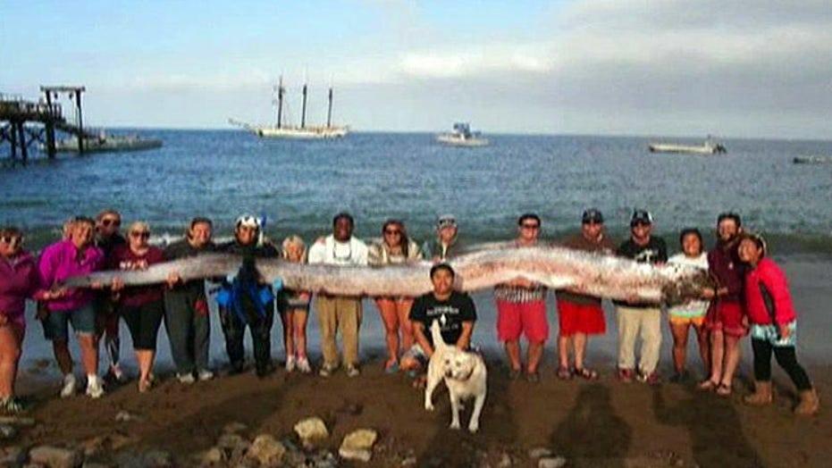 18-foot sea creature found off coast of Southern California