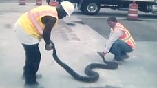 -foot snake discovered in Miami