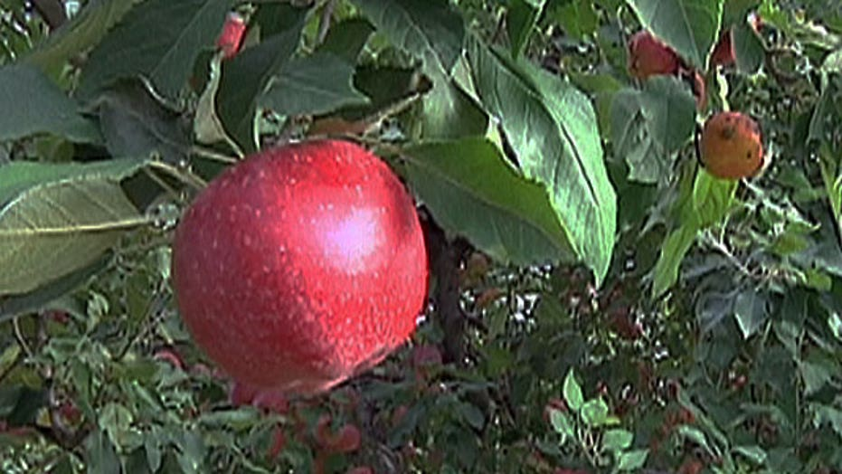 Pick-Your-Own: Fall recipes fresh from the orchard