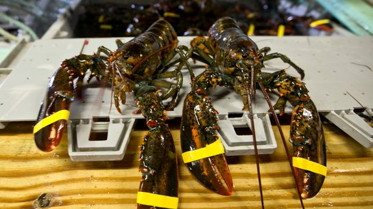 Maine lobster fishing is a family business spanning generations