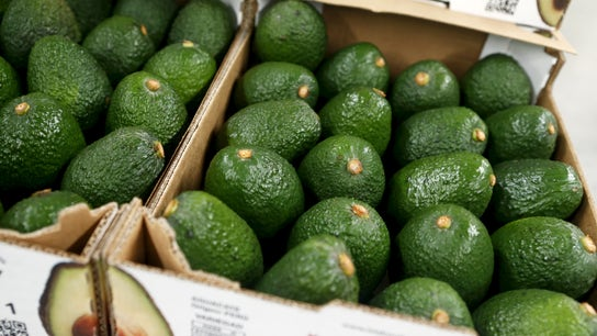 Soaring avocado prices coming down