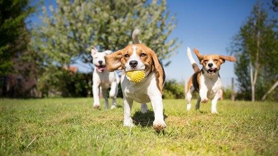 Elanco buys Bayer's animal health business for $7.6B