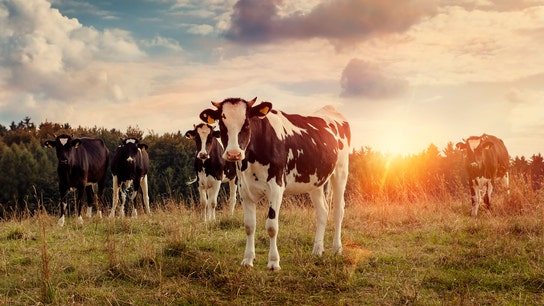 US dairy farmers 'deeply concerned' about exports situation