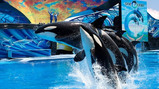 SeaWorld and former CEO fined $5 million for 'Blackfish' fallout