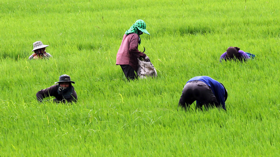 Thailand to up controls on paraquat, other farm chemicals
