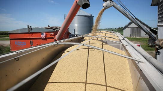US soybean farmers say they feel suppressed by Trump's tariffs