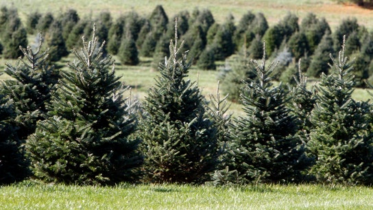 Cost of celebrating Christmas might climb this year