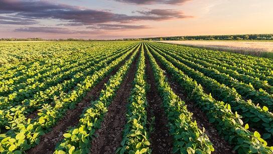 Soybean farmers fear China tariffs could shut down business for good