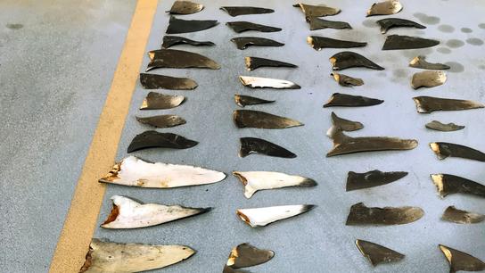 The Latest: 10 fishermen plead guilty in shark fin case