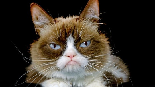 How much was Grumpy Cat worth?