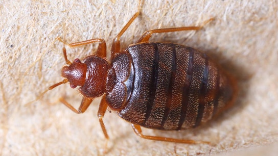 Philadelphia has an expensive bed bug problem, study claims