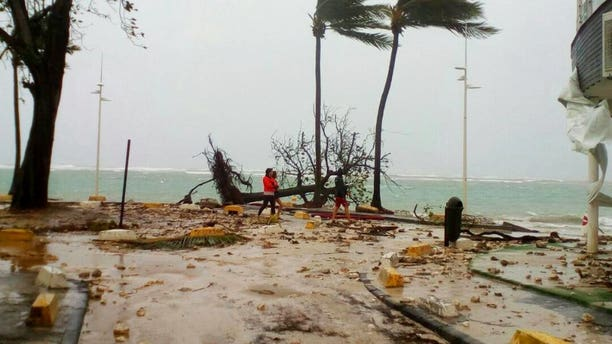 People walk by a fallen tree off the shore of Sainte-Anne on the French Caribbean island of Guadeloupe, early Tuesday, Sept. 19, 2017, after the passing of Hurricane Maria.