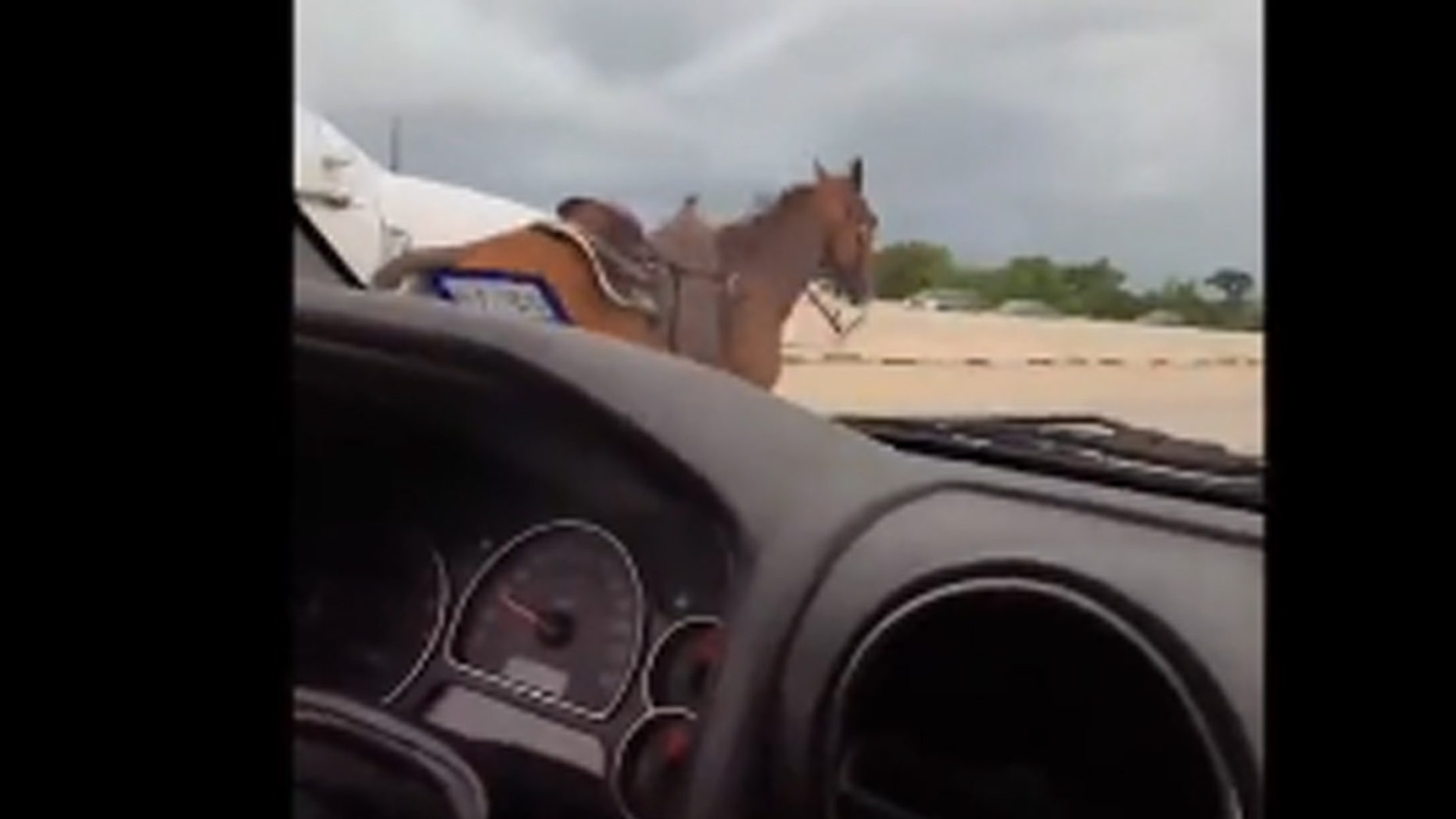 A viral video showed drivers in Houston capture a horse that was running in the middle of the highway.