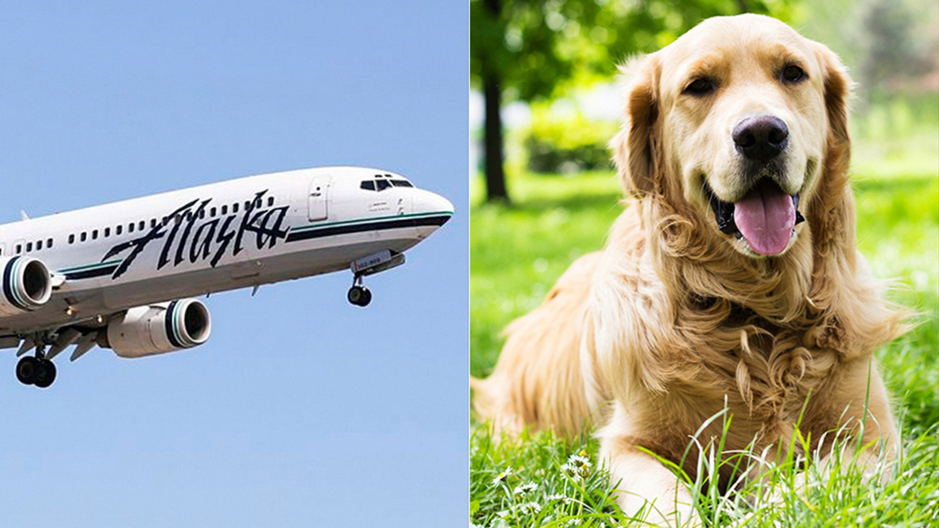 alaska airlines dog policy