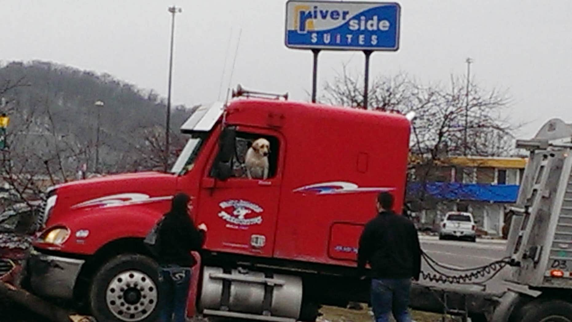 This Friday, March 4, 2016 photo provided by David Stegora shows a semi-truck with a dog in the driver's seat that crashed at a convenience store in Mankato, Minn.