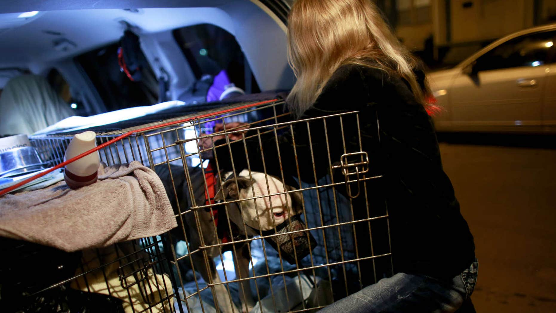 In this Thursday, March 24, 2016 photo, Wendy Perry, with For The Love of Paws R.I. Rescue and Transport, delivers an American pit bull terrior, Gucci, to the Kelly family in Norfolk, Va.