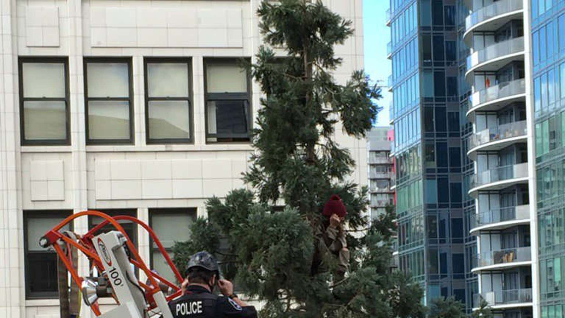 Picture shows a paramedic trying to convince a man in a red hat to get down from an 80-foot tree in Seattle.