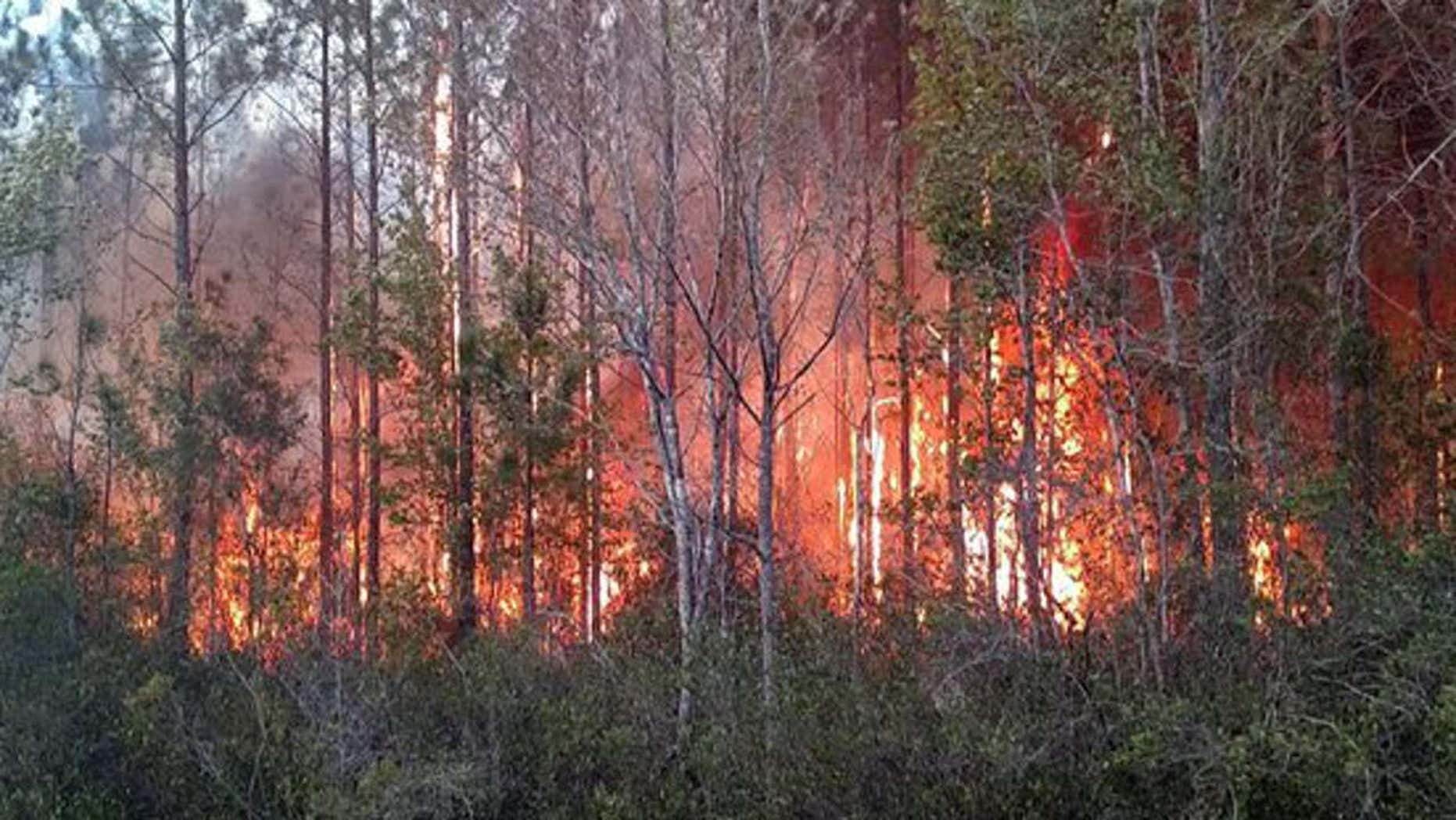 A Florida man burning books in his yard caused a 700-acre brush fire which destroyed two buildings, damaged six homes and nearly 20 sheds and barns, officials said Thursday.