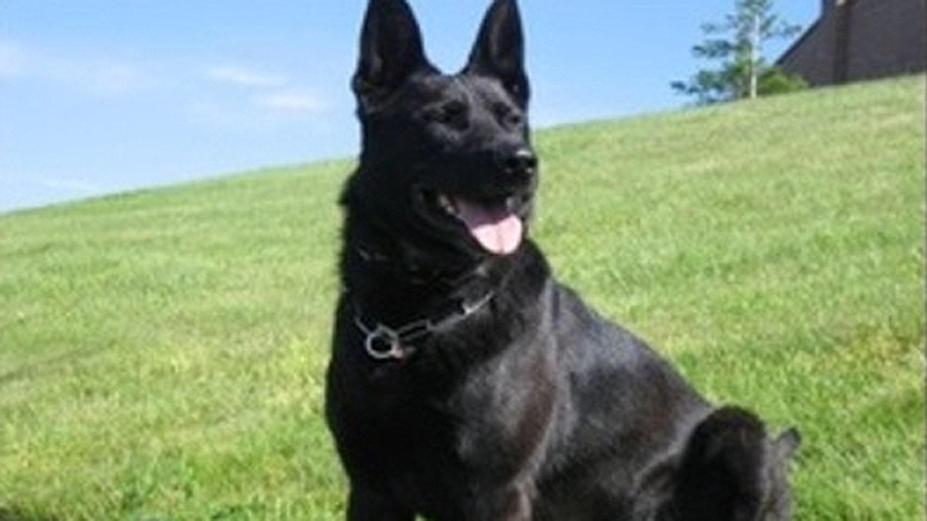 Clark County Sheriff dog Kane