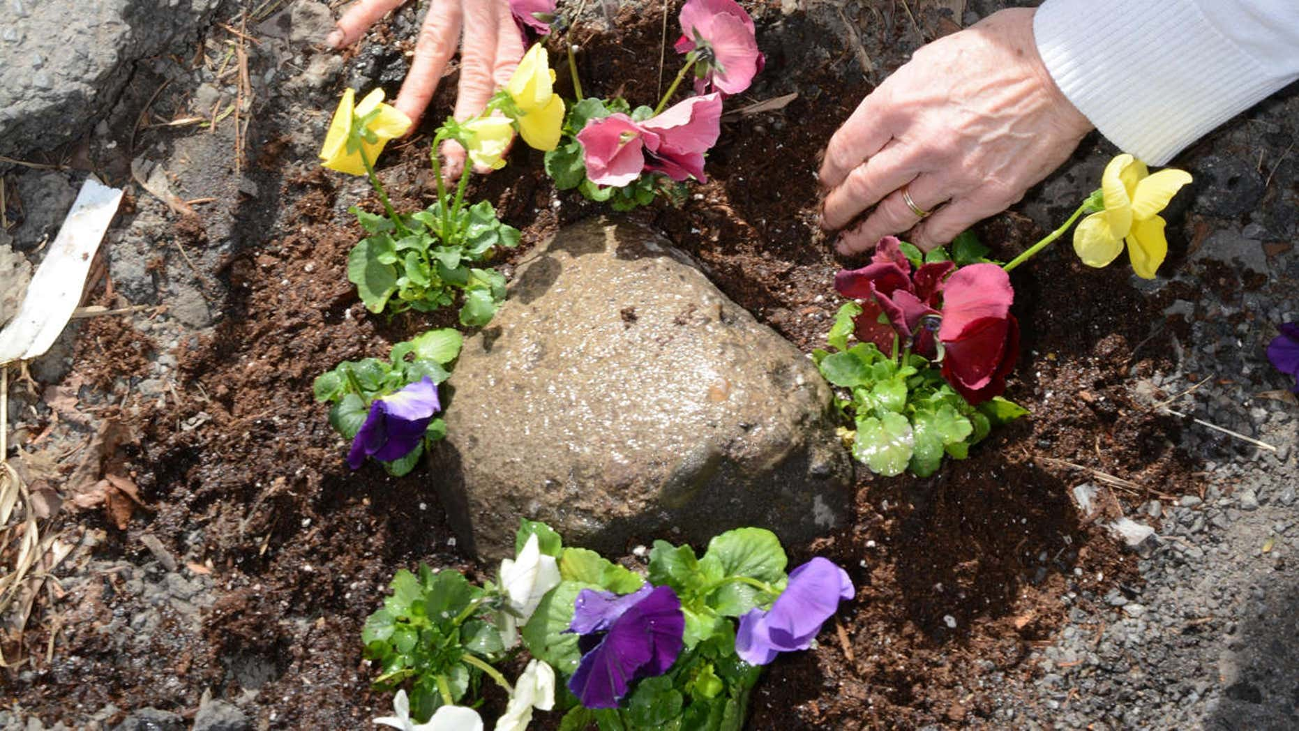 April 13, 2015: Elaine Santore fills a pothole in the middle of North Center St. with pansies in Schenectady, N.Y