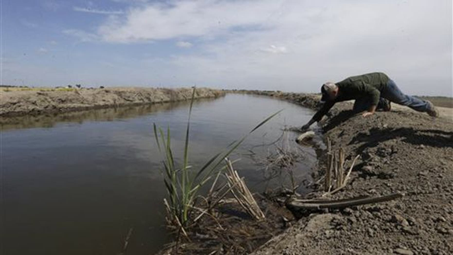 Farmer Gino Celli draws a water sample to check the salinity in an irrigation canal that runs through his fields near Stockton, Calif. in May 2015.