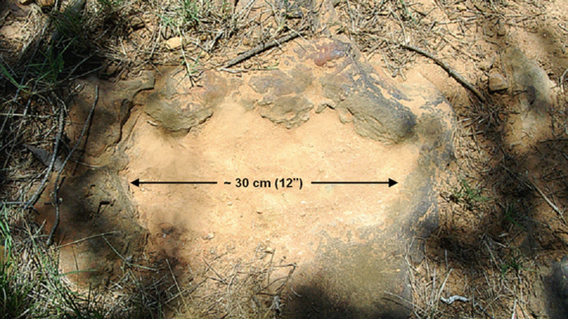 The 12-inch-wide footprint belonged to an armored, tank-like plant-eater.