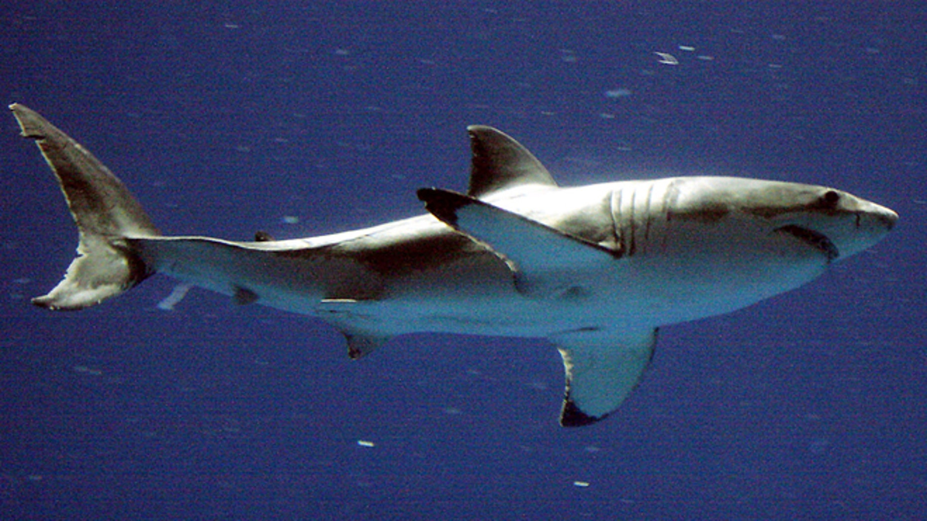 An adult film actress pretended to be bit by a shark last week while going diving off the coast of Palm Beach. She faked the bite so the video of her getting bit would go viral.