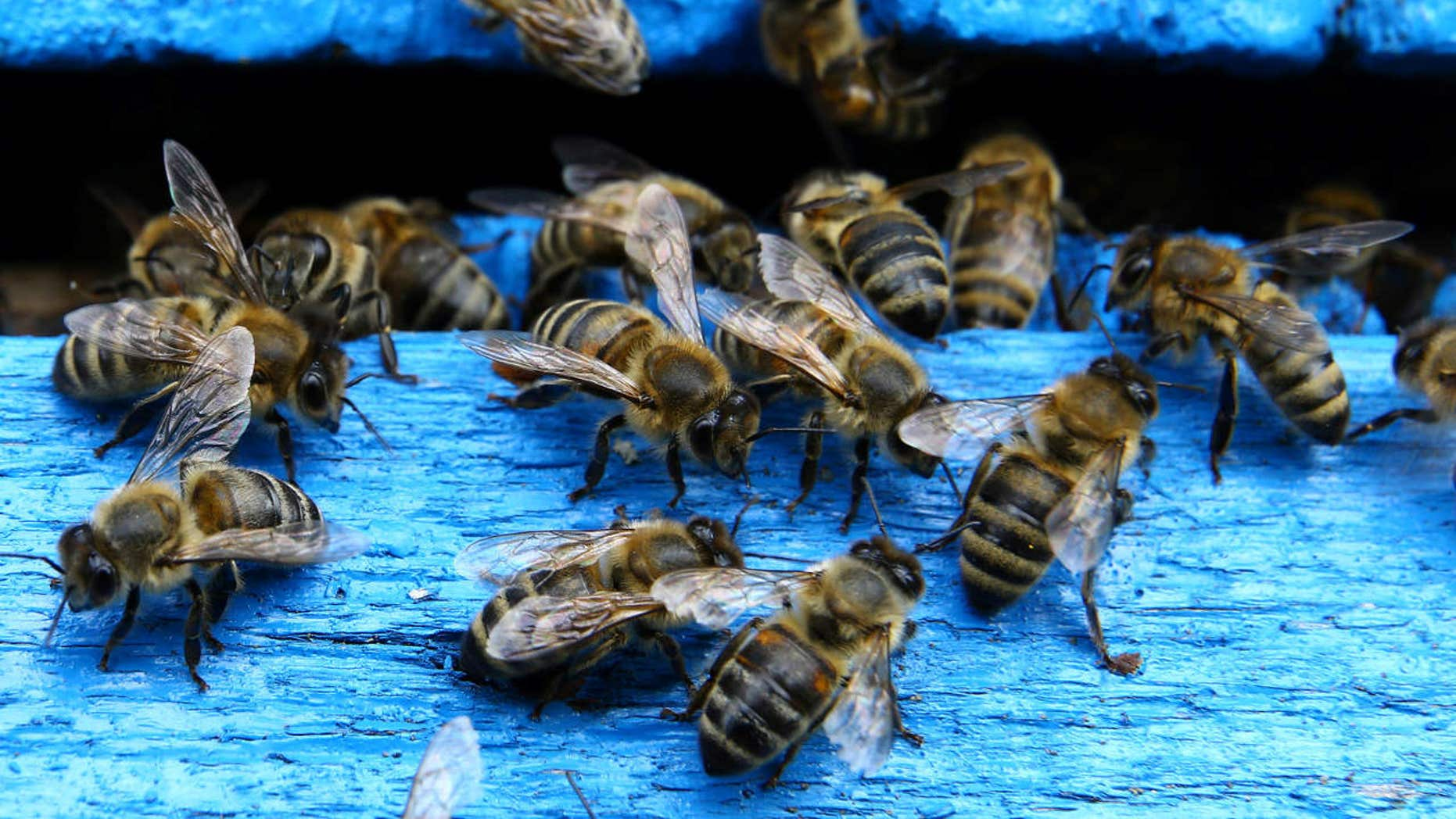 Police say that the New Jersey beehive at the center of an attack on a beekeeper and his wife has been moved to a farm.