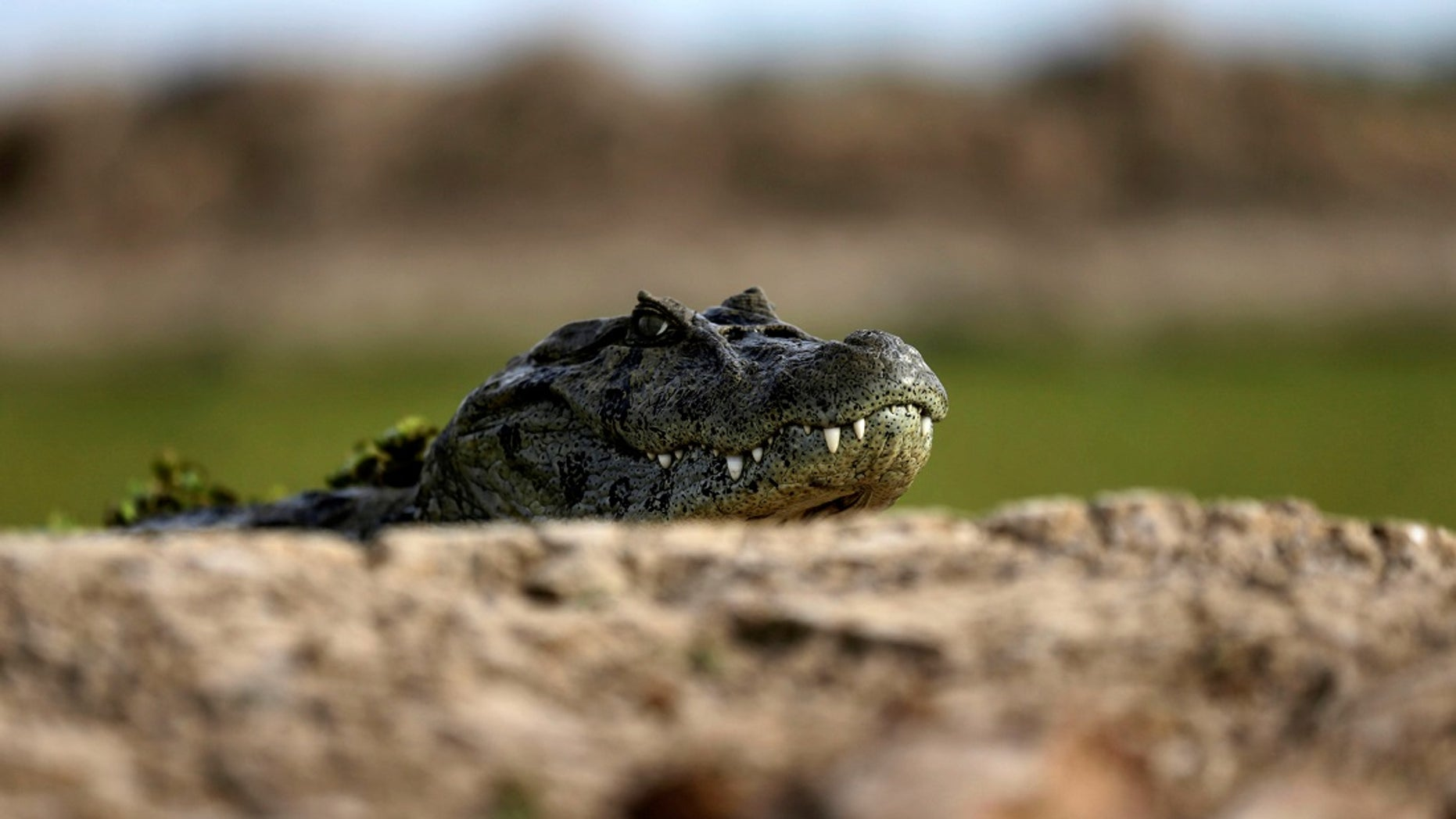 A 3-foot-long alligator found at an Atlantic City, New Jersey, hotel earlier this month was part of a rap video filmed there, according to authorities.