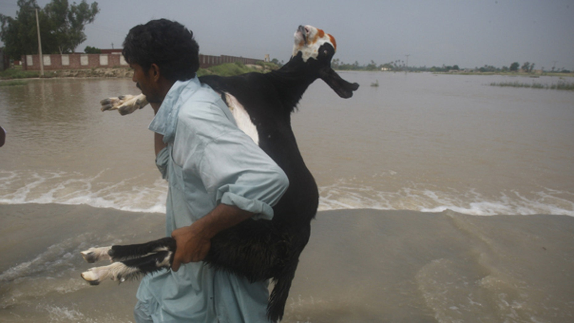 Aug. 6: A Pakistani villager carries a goat fleeing village in Mehmud Kot near Multan in central Pakistan. Stormy weather grounded helicopters carrying emergency supplies to Pakistan's flood-ravaged northwest Friday as the worst monsoon rains in decades brought more destruction to a nation already reeling from Islamist violence.