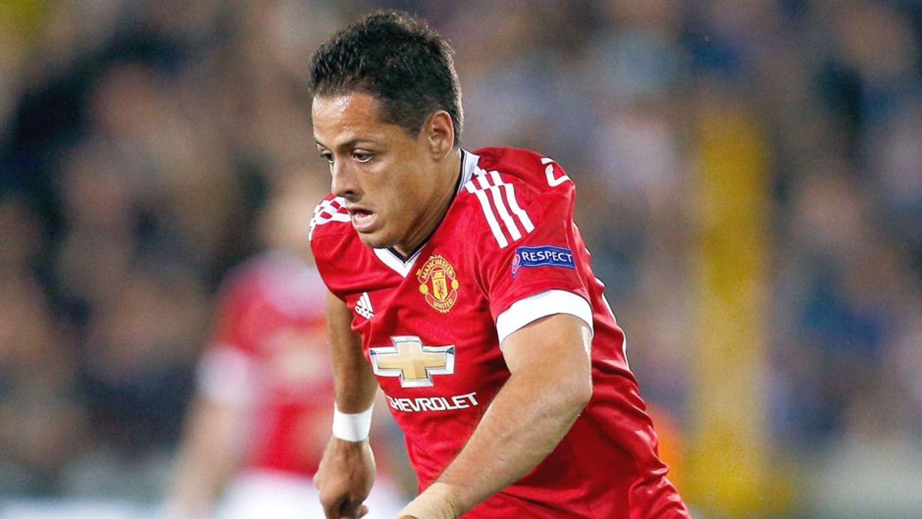 BRUGGE, BELGIUM - AUGUST 26: Javier Hernandez of Manchester United in action during the UEFA Champions League qualifying round play off 2nd leg match between Club Brugge and Manchester United held at Jan Breydel Stadium on August 26, 2015 in Brugge, Belgium. (Photo by Dean Mouhtaropoulos/Getty Images)