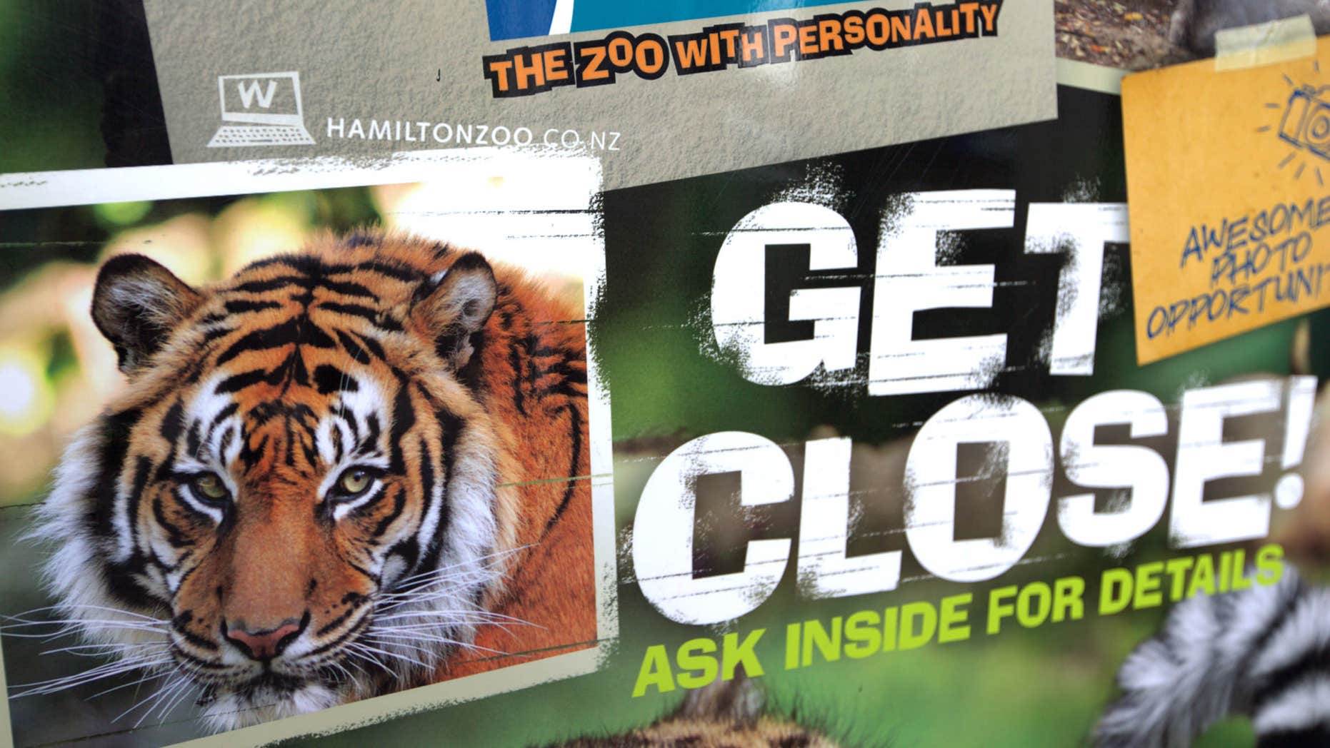 Sept. 20, 2015: A tiger advertising sign is seen outside Hamilton Zoo after a female zookeeper was killed by one of the tigers at the zoo in Hamilton, New Zealand.