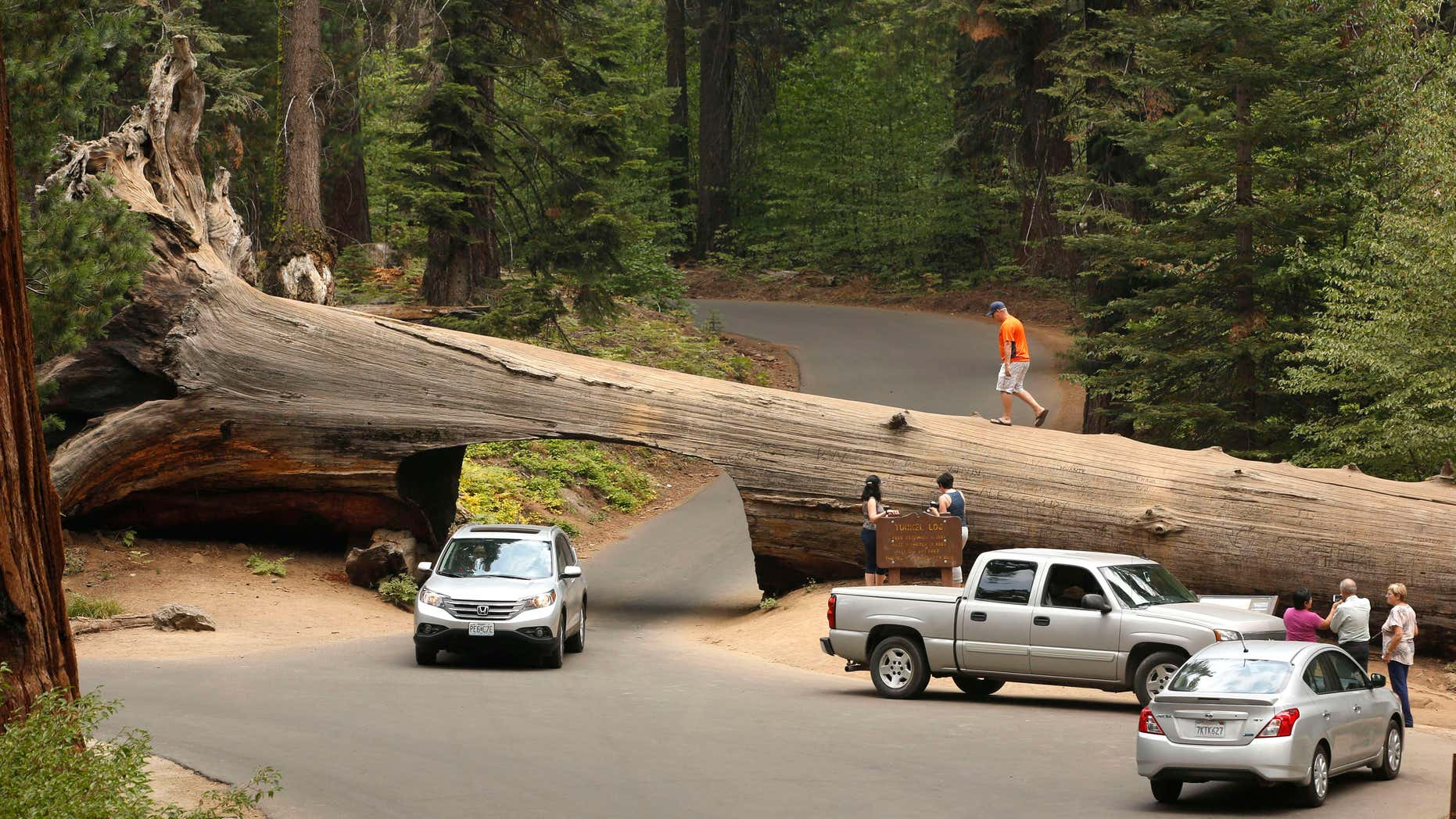 In this photo taken Friday Sept. 11, 2015, visitors explore the Tunnel Log, a passage cut through a Giant Sequoia tree that fell in 1937, at Sequoia National Park, near Visalia, Calif.