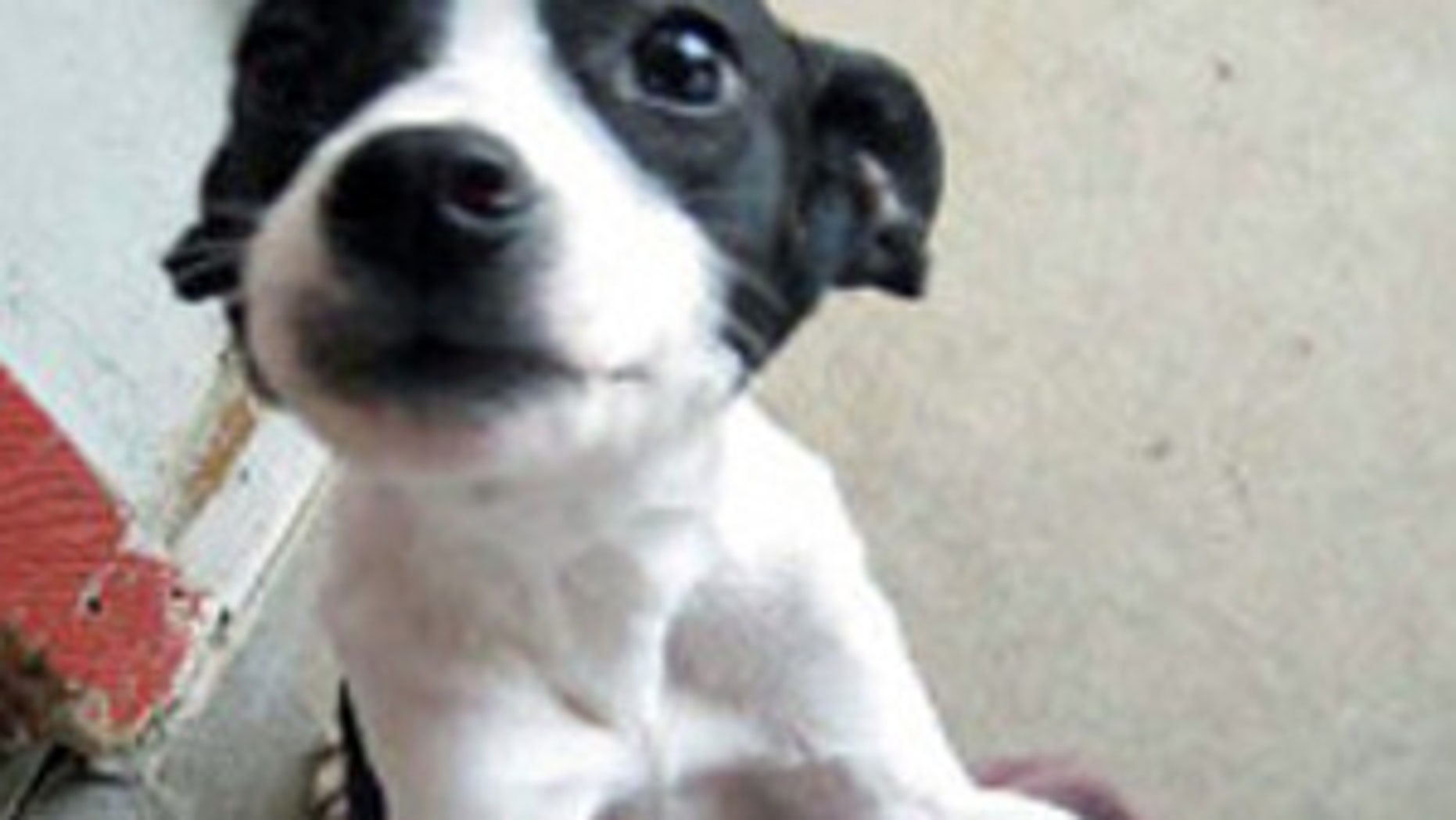Oklahoma puppy declared dead is found alive and well and needs a home.