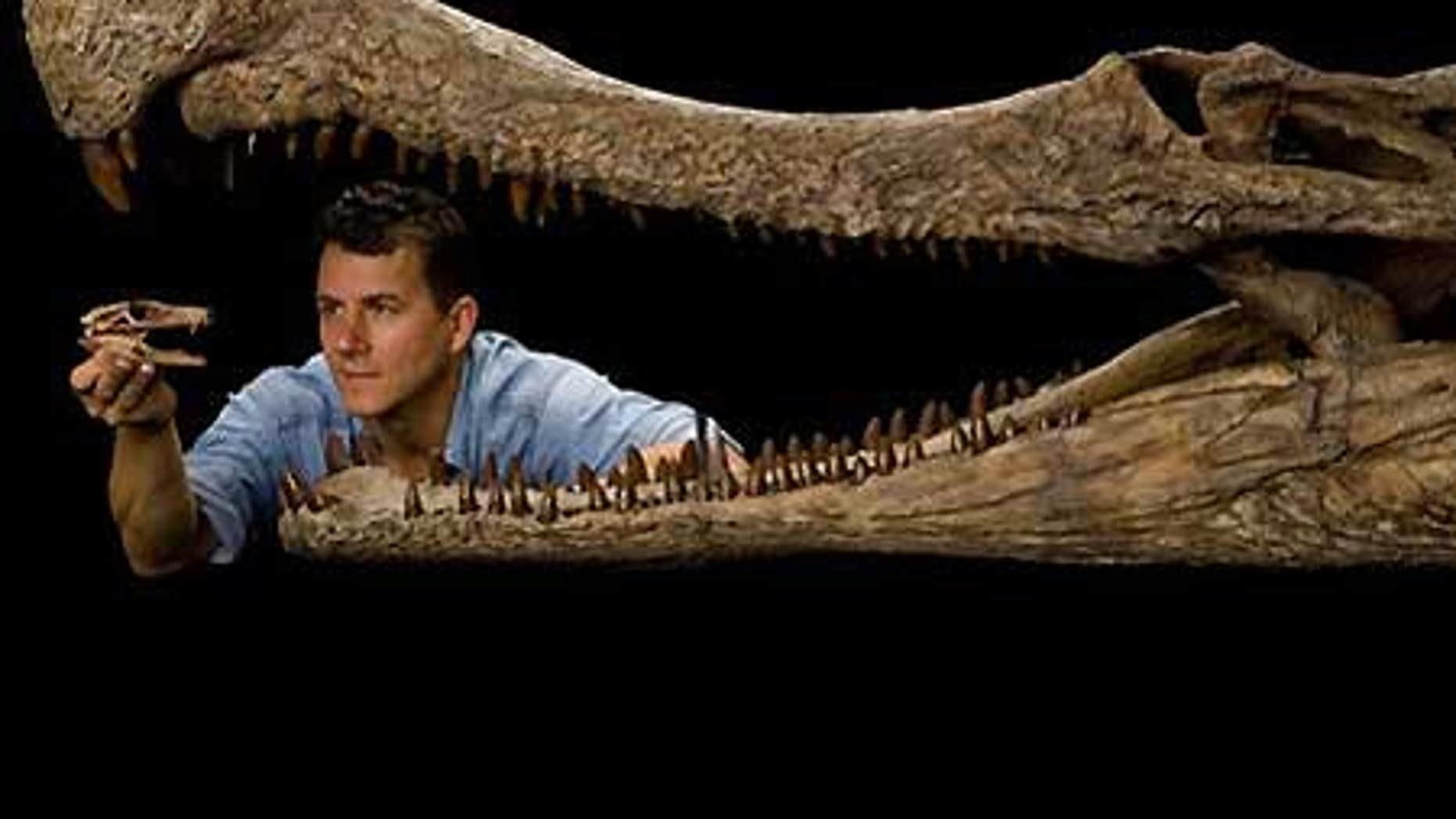 National Geographic Explorer-in-Residence, enveloped by the jaws of SuperCroc, holds the fossil head of DogCroc.