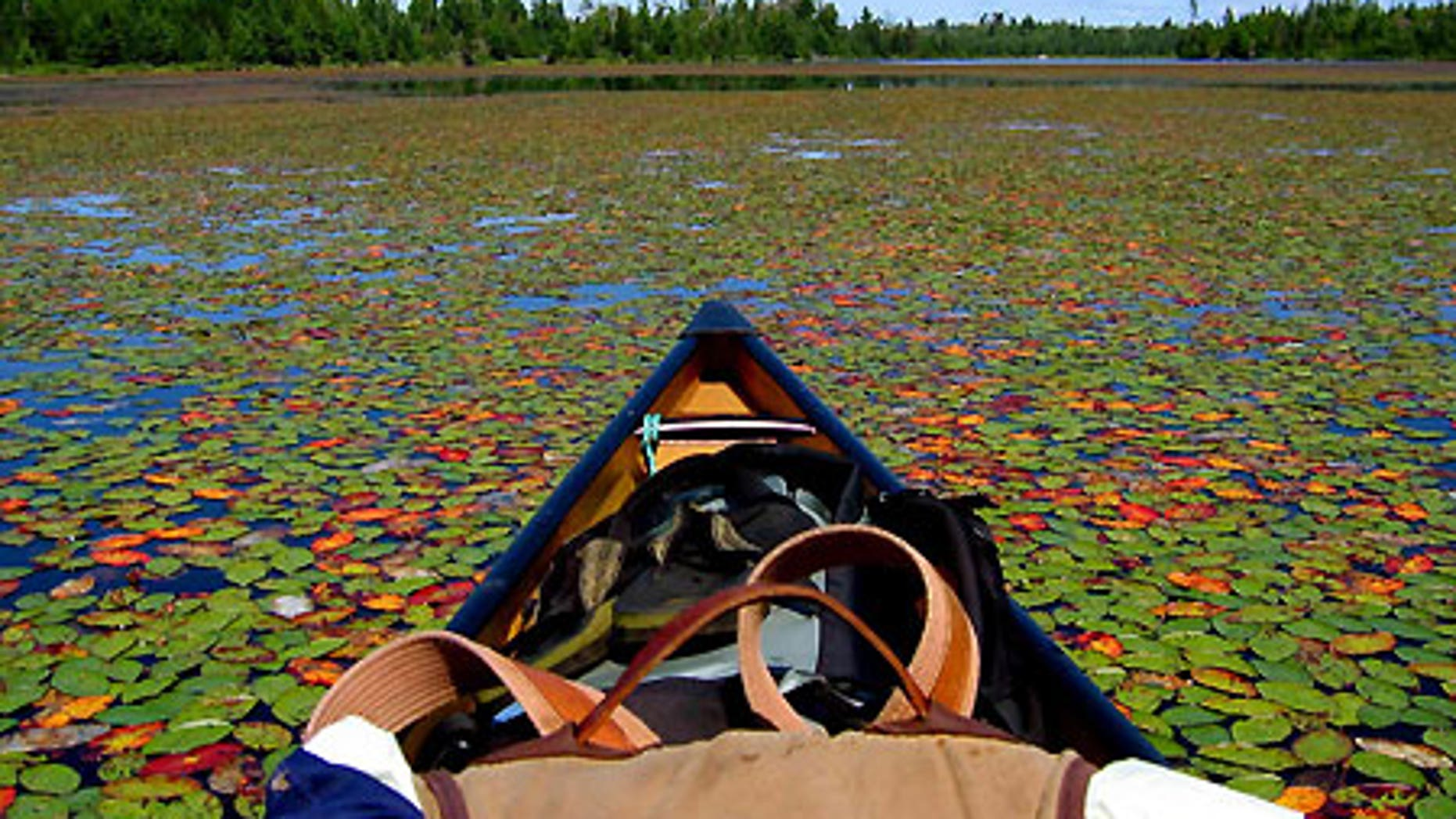 The view from a canoe in the Boundary Waters Canoe Area Wilderness in northern Minnesota.