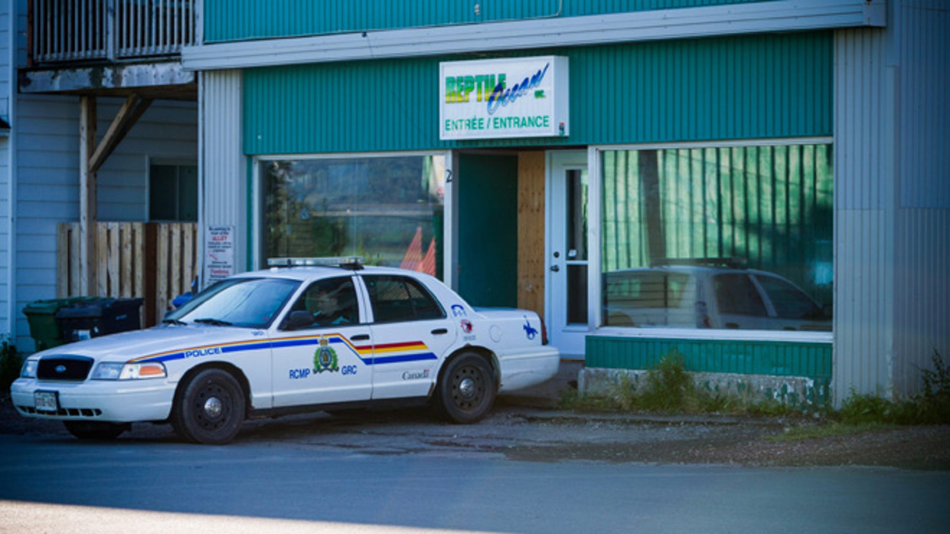 Aug. 6, 2013: A Royal Canadian Mounted Police cruiser sits outside the Reptile Ocean exotic pet store in Campbellton, New Brunswick, Canada.
