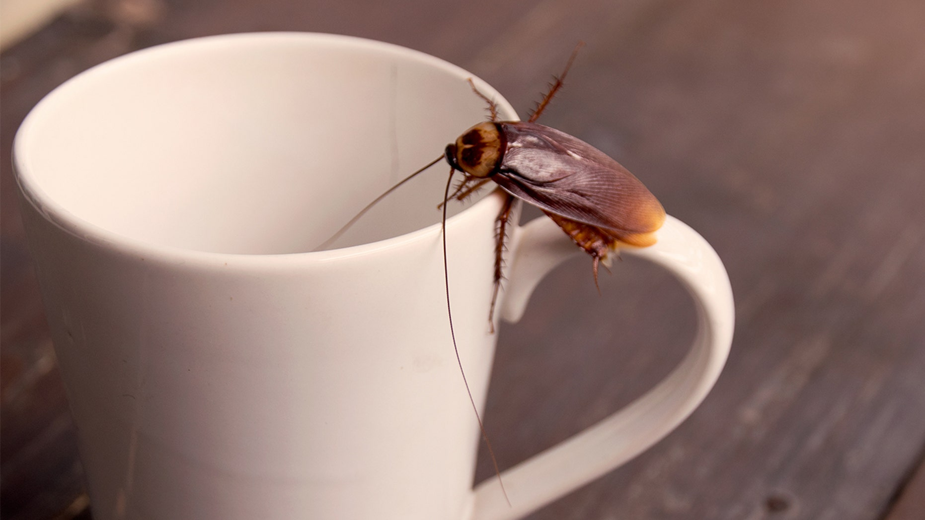 Would you drink cockroach milk?