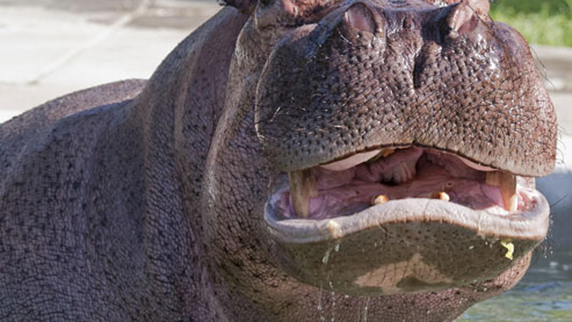 Hippo attacks in Kenya kill 2, including Taiwan tourist
