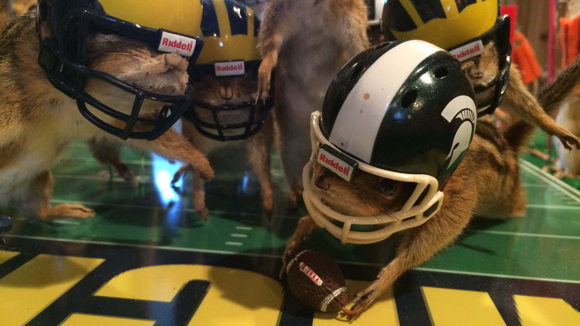 This photo taken Monday, Oct. 26, 2015, shows stuffed chipmunks portraying players on the final play of the Michigan State-Michigan NCAA college football game at the home of taxidermist Nick Saade in Lansing, Mich.