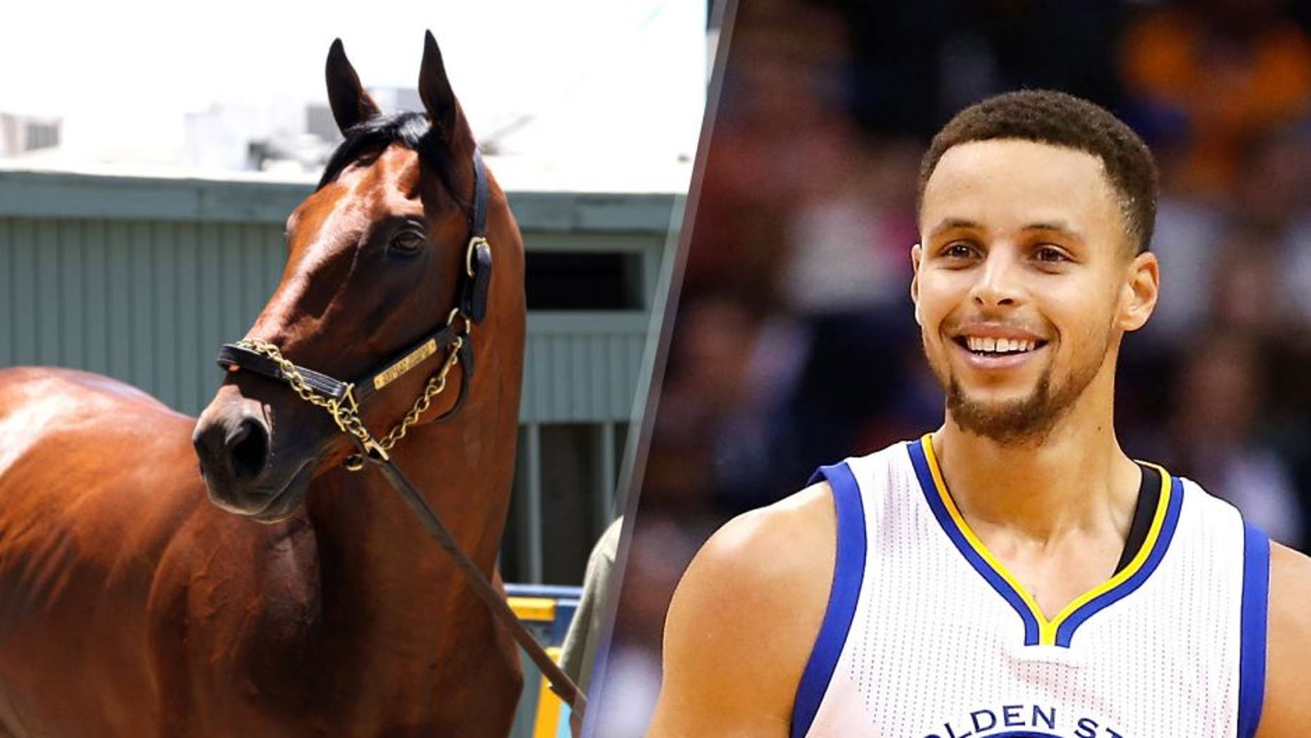 ARCADIA, CA - JUNE 18: American Pharoah in portrait at Santa Anita Park, Race Track at June 18, 2015 (Photo by Cecilia Gustavsson /Getty Images) PHOENIX, AZ - NOVEMBER 27: Stephen Curry #30 of the Golden State Warriors during the NBA game against the Phoenix Suns at Talking Stick Resort Arena on November 27, 2015 in Phoenix, Arizona. The Warriors defeated the Suns 135-116. NOTE TO USER: User expressly acknowledges and agrees that, by downloading and or using this photograph, User is consenting to the terms and conditions of the Getty Images License Agreement. (Photo by Christian Petersen/Getty Images)