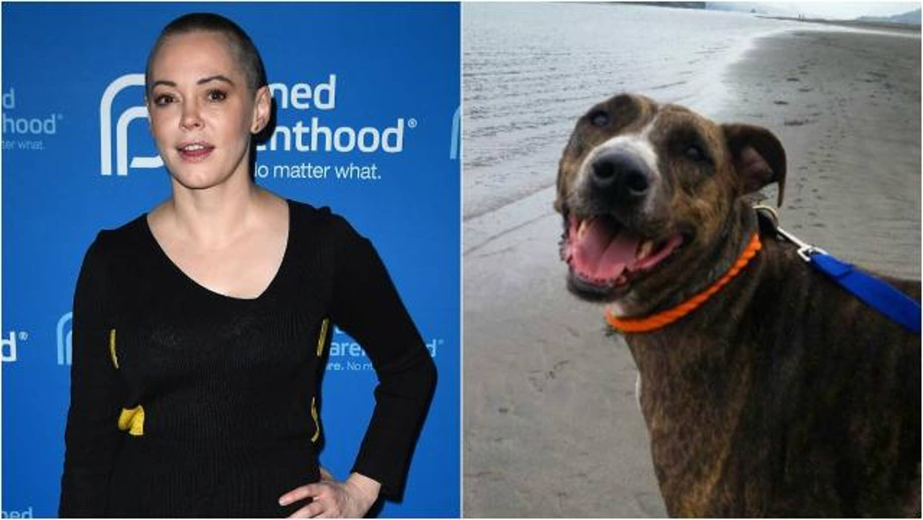 Rose McGowan and her dog.