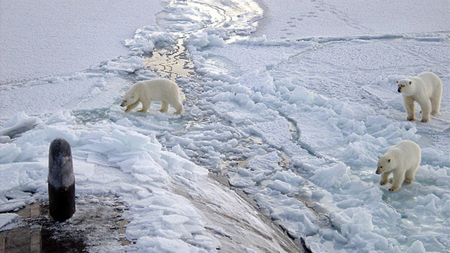 The polar bear has become the poster child for the global warming movement. In May 2008, the U.S. classified the polar bear as a threatened species, the first with its survival at risk due to global warming.