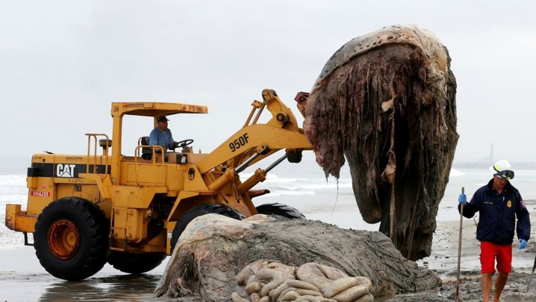 Several giant, hairy creatures have washed up in recent years.