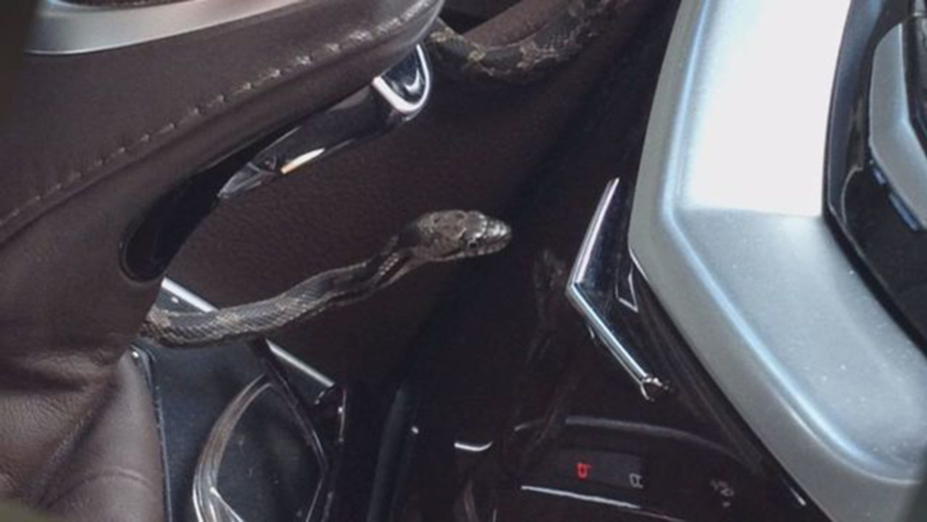 The garden snake appeared from her car's air vent while she was driving, Fox 5 DC reported.