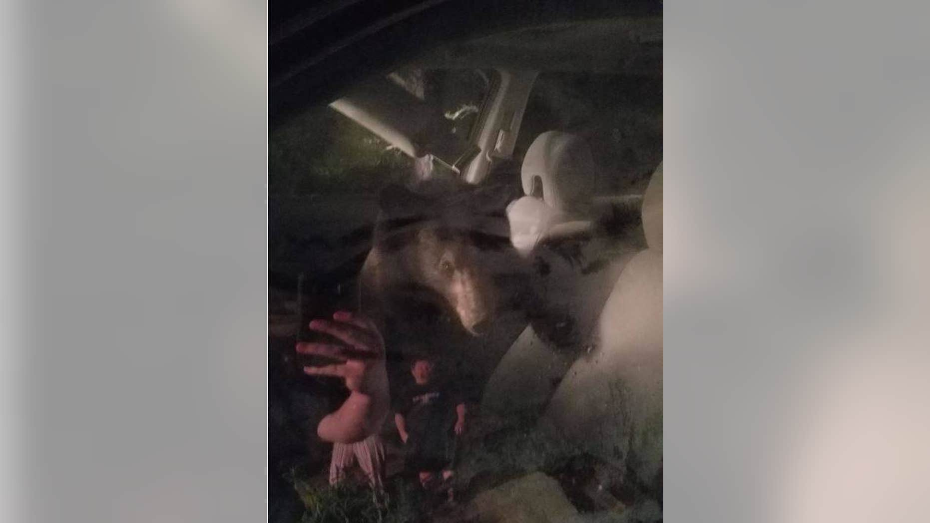 Roanoke County Police Department found the bear inside the vehicle about 5 a.m. last Thursday. (Roanoke County Police Department)