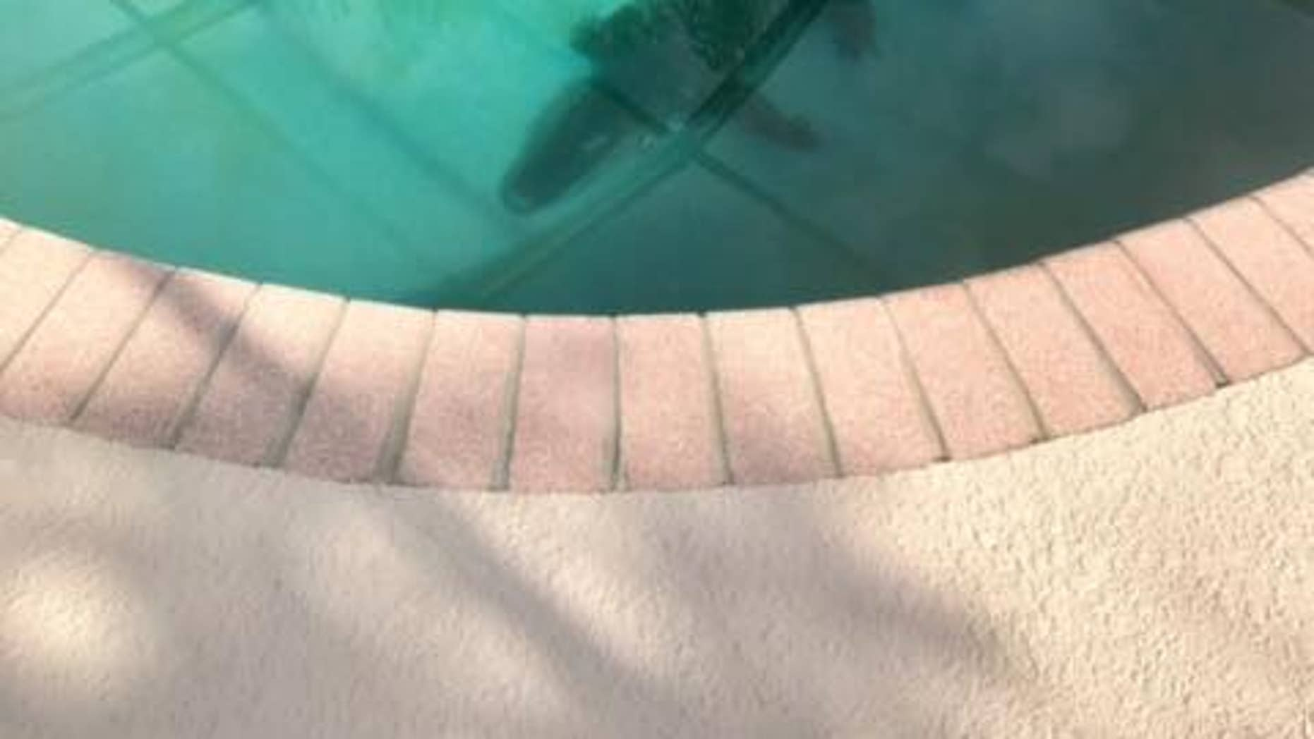 The alligator was swimming in the pool at a Sarasota home Monday morning, police said. (Sarasota County Sheriff's Office)