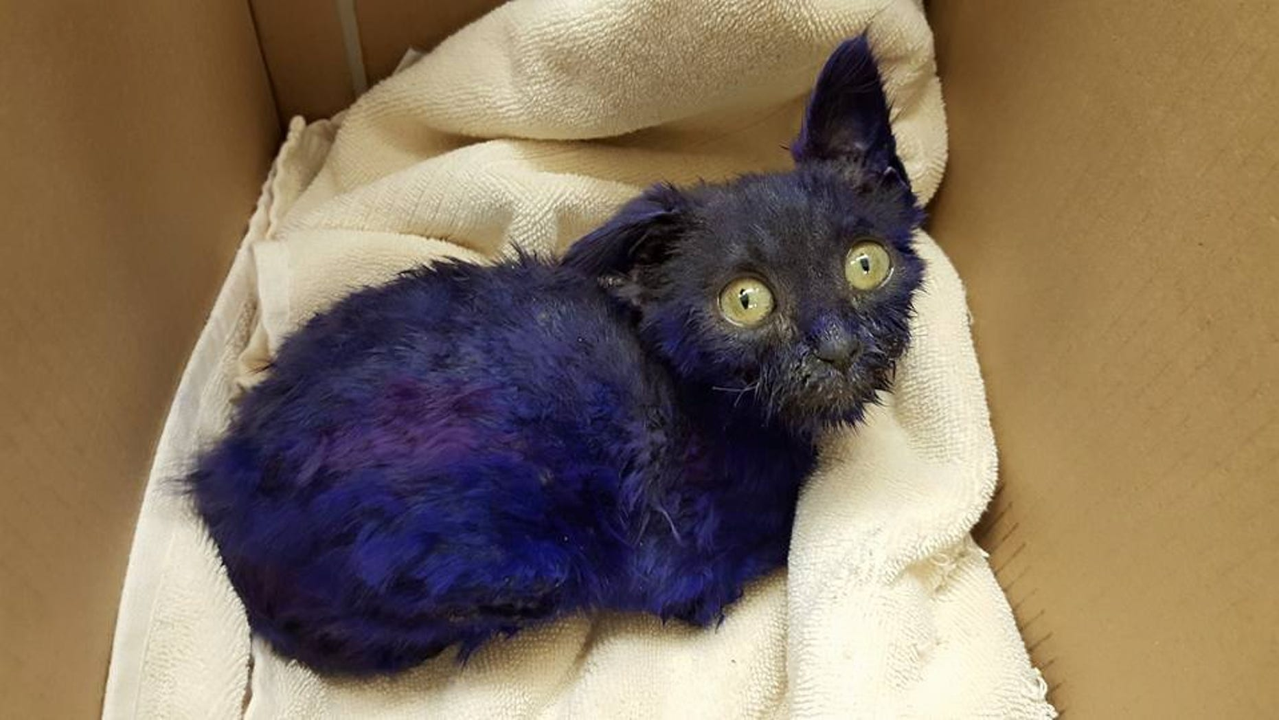 """Smurf"" was found dyed purple with about 20 bite marks on his body."