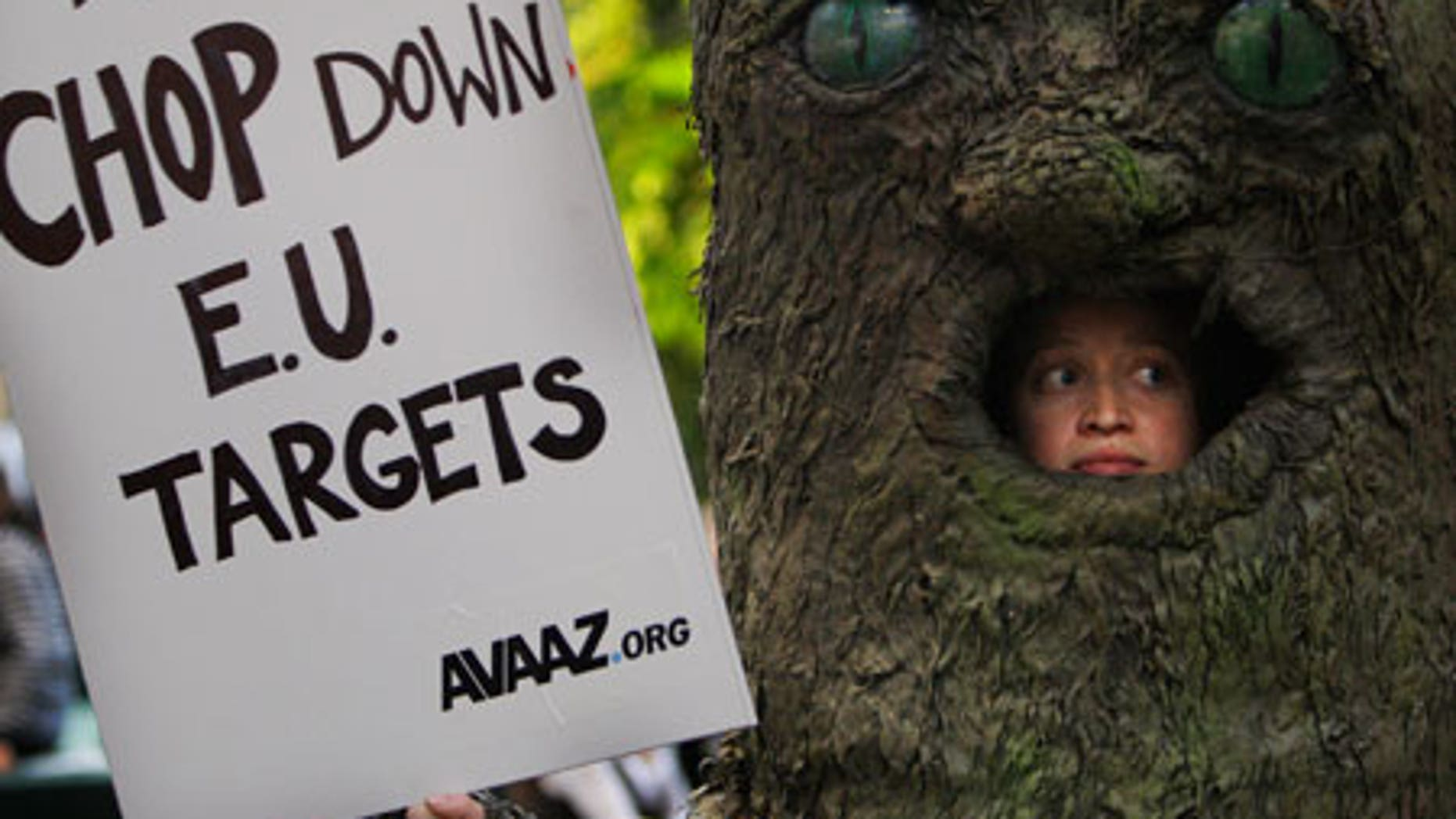 Dec. 8: An activist looks out of a giant tree as he participates in a demonstration against the cutting of trees at the U.N. Climate Summit in Copenhagen.